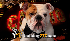 Bulldog777 Offers Refunds on Bets Lost in Shootouts